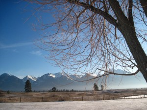 Mission Mountains with Tree