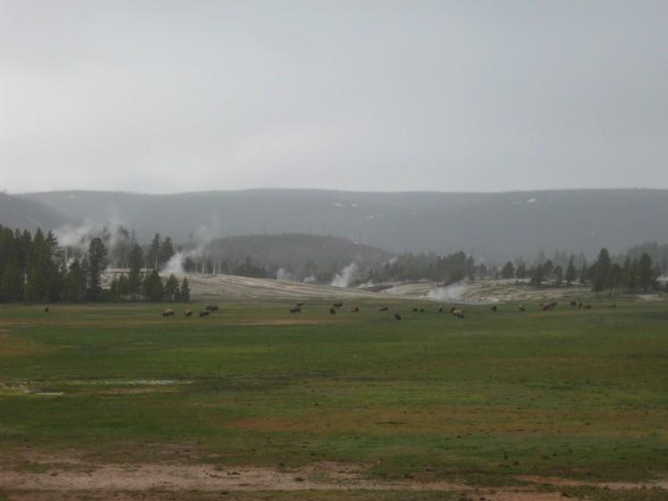 Upper Geyser Basin, YNP, in Rain