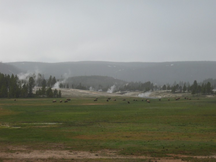 Upper Geyser Basin, YNP, in Rain