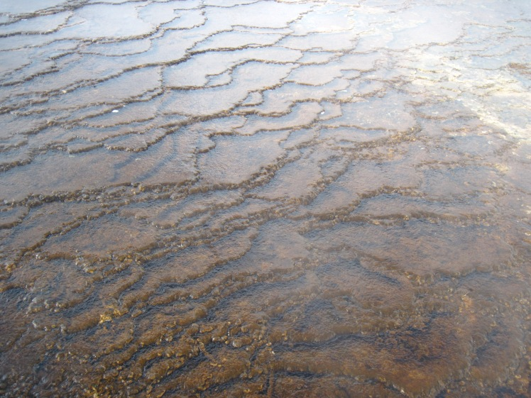 Trickling Terraces of Travertine, always shifting ,Mammoth Hot Springs, Yellowstone