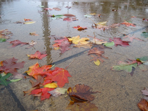 Sandy-strewn Leaves in a Puddle