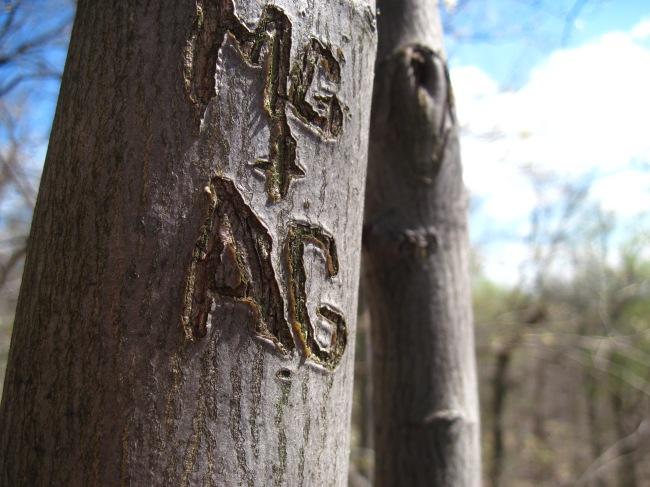 MG + AG